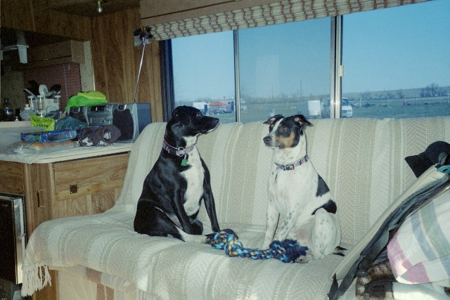 Bailey and Max in motorhome