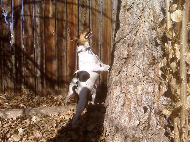 Daphne squirrel hunt