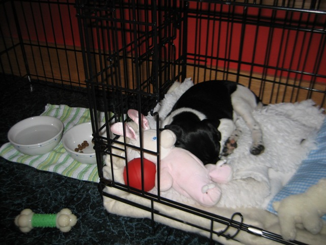 Puppy Hobbes zonked out