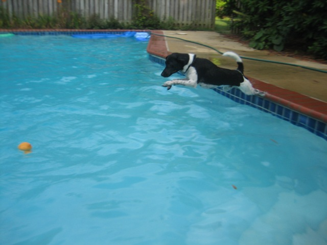 Hobbes diving for ball