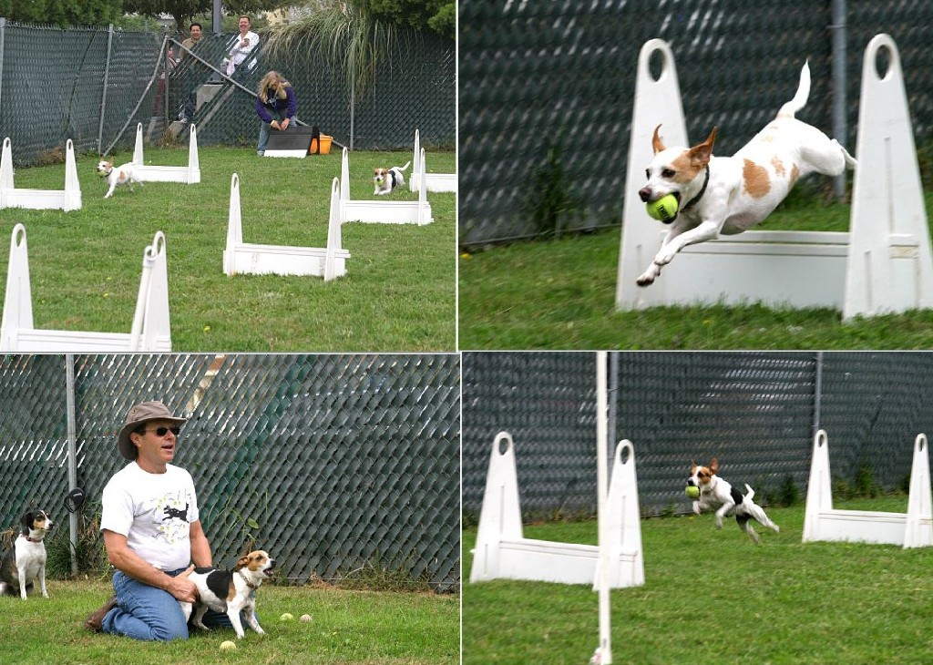Flyball demo